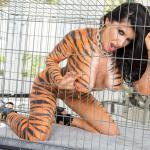 Tigertje